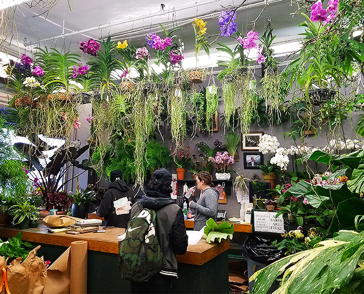 Hanging Orchids Inside the Store.
