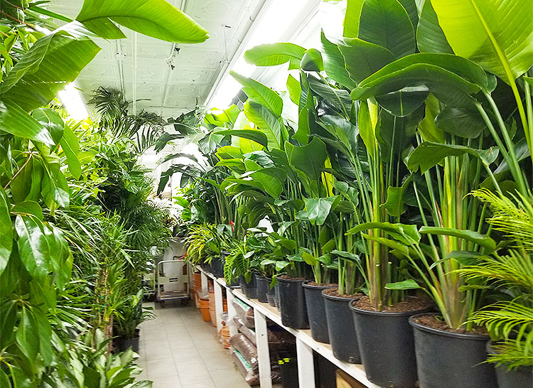 Tropical Plants Line the Back of the Store.