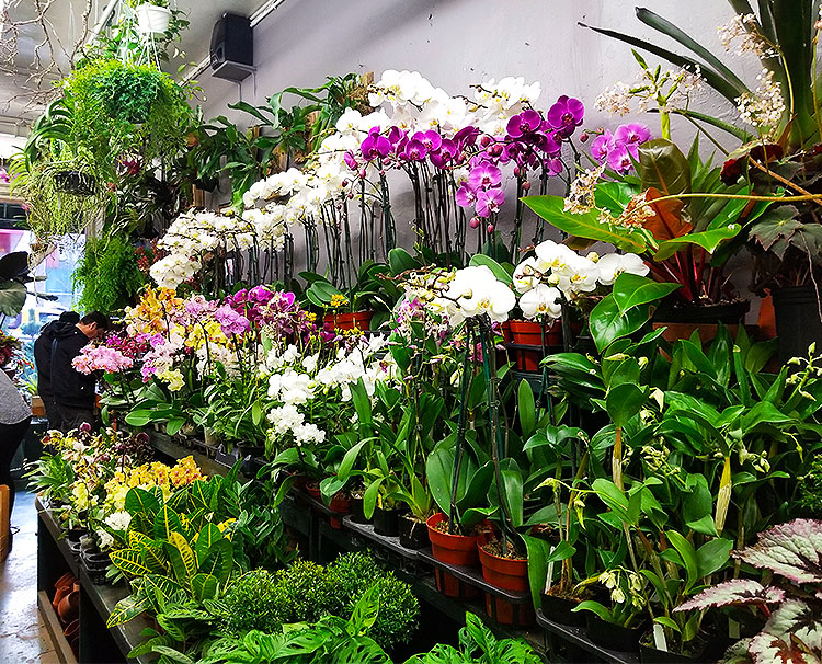 Orchids and Smaller Plants.