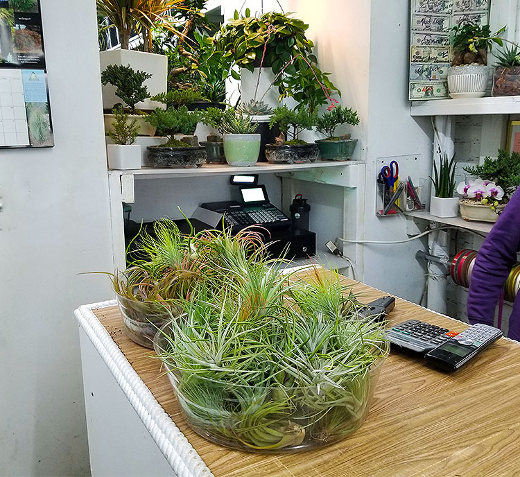 Air Plants and Bonsai.