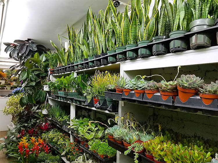 Succulents, Bromeliads and Other Plants.