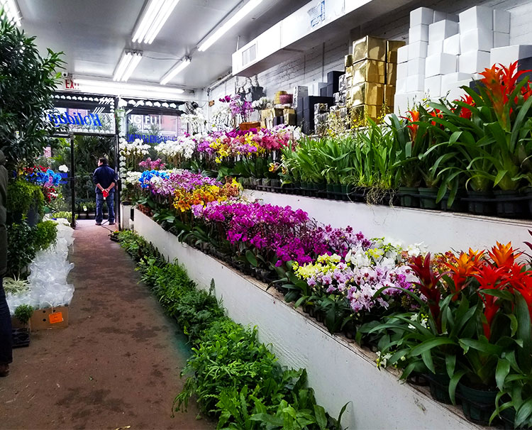 A Wall of Orchids and Bromeliads.