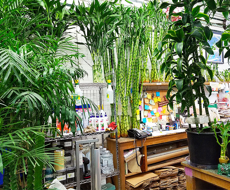 Bamboo, Plants, and Plant Care in the Shop.
