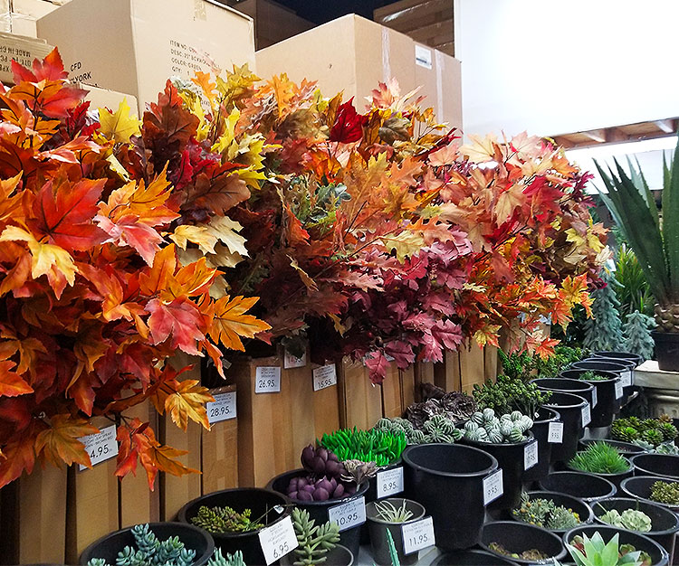 Autumn Leaves Above a Large Variety of Succulents.