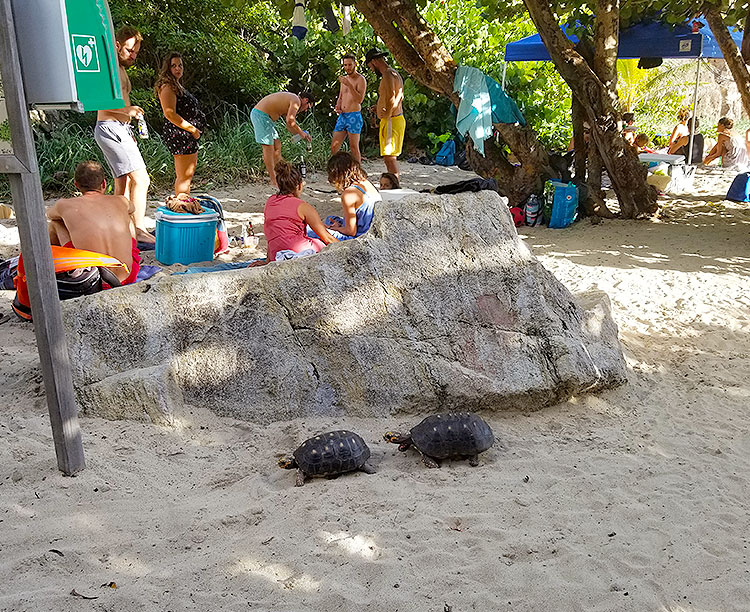 Some of The Many Turtles on the Island.