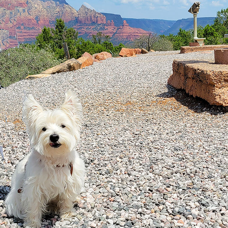 A Dog's View of Sedona