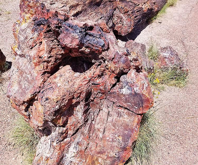 A Close Up Of A Petrified Wood