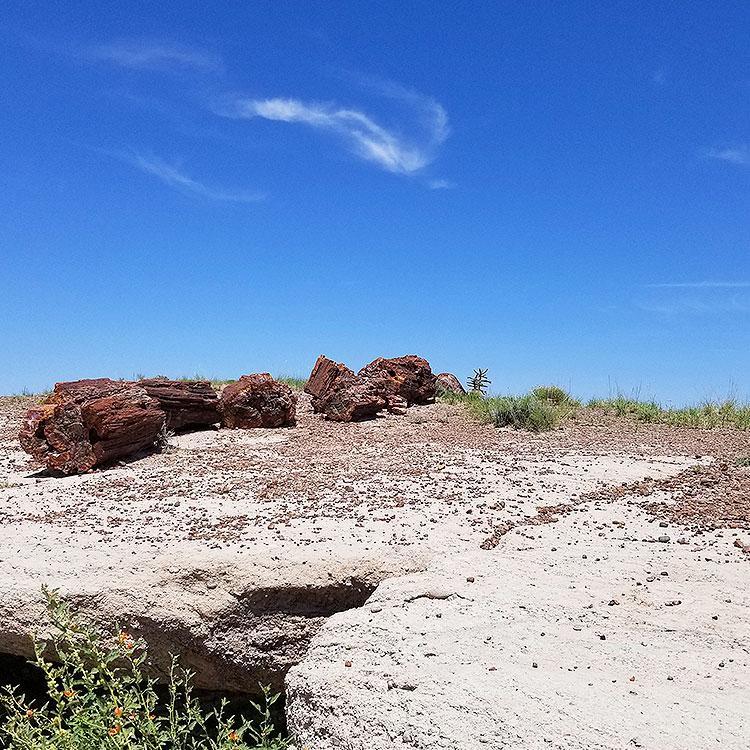 Large Petrified Logs